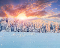 Colorful winter sunrise in mountains Royalty Free Stock Images