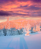 Colorful winter sunrise in mountains. Stock Photography