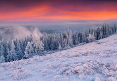 Colorful winter sunrise in mountains. Royalty Free Stock Image