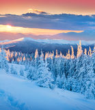 Colorful winter sunrise in mountains. Royalty Free Stock Images
