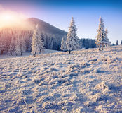 Colorful winter sunrise in the mountains. Stock Image