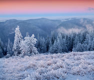 Colorful winter sunrise in the mountains. Royalty Free Stock Photography