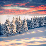 Colorful winter sunrise in the mountains. Stock Images