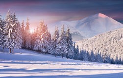 Colorful winter sunrise in snowy mountains Royalty Free Stock Photography