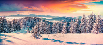 Colorful winter sunrise in the snowy mountains. Fresh snow at frosty morning glowing first sunlight Royalty Free Stock Photo