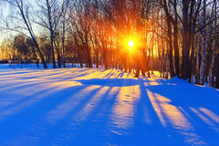 Colorful winter sunset. Colorful sunset in winter forest Royalty Free Stock Image
