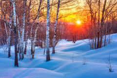 Colorful winter sunset. Colorful sunset in winter forest Royalty Free Stock Photo