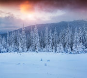 Colorful winter sunset in mountains Royalty Free Stock Photos