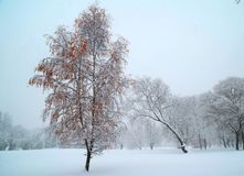 Colorful Winter tree Royalty Free Stock Images