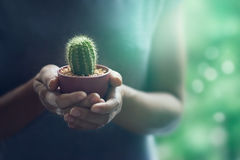 Colorful woman holding a small cactus in hands gently on nature Royalty Free Stock Images
