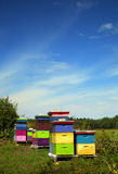 Colorful wood hive boxes Royalty Free Stock Photos
