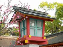 Colorful wood Japanese shrine lantern with pretty pink plum blossoms next to it. Royalty Free Stock Photos