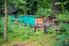 Beekeeping in the forest. Colorful wooden beehives in the bosom of nature royalty free stock photo