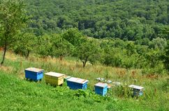 Colorful wooden beehives on hill slope. Rows of colorful wooden beehives standing on the hill slope near forest. Summer in the countryside royalty free stock photo