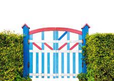 Colorful wooden garden gate isolated on white background. Colorful wooden garden gate with green bush fence isolated on white background royalty free stock image
