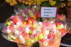Colourful wooden tulips for sale at the flower market in Amsterd Royalty Free Stock Photo