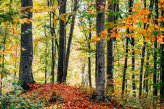 Colorful woodland Royalty Free Stock Photos