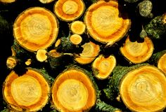 Colorful Woodpile. With orange and red colors and round wood Royalty Free Stock Photo