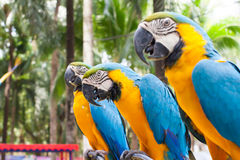 Macaw parrot. Colorful yellow and blue macaw is shown in a close-up. Here are some other bird photo you might like Stock Images