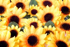 Colorful yellow flowers Royalty Free Stock Images