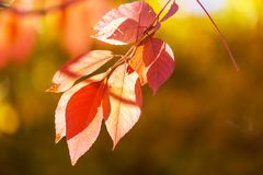 Autumn leaves. Colorful yellow leaves in Autumn season. Close-up shot. Suitable for background image stock images