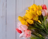 Colorful pink, red and yellow tulips with a white background royalty free stock photos