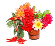 Colorful yellow, red needle dahlias in a ceramic mug, scattered petals isolated on white stock photo