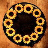Colorful yellow round sunflower frame Stock Image