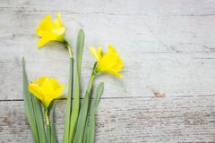 Colorful yellow spring daffodils with decorations stock photos