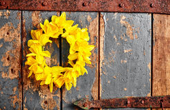 Colorful yellow spring wreath of daffodils Royalty Free Stock Photo