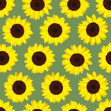 Colorful yellow sunflowers. Seamless pattern. Royalty Free Stock Image