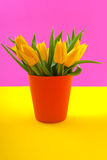 Colorful yellow tulips Royalty Free Stock Images