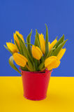 Colorful yellow tulips Stock Photography