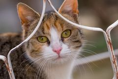 Colorful young cat looks through the fence.  royalty free stock photos