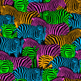 Colorful zebra seamless pattern. Stock Photos