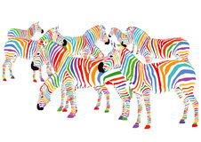 Colorful zebras. A group of colorful zebras on a white background Royalty Free Stock Photo