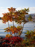 Colorfule flodstrandträd Arkivfoton