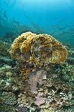 colorfull珊瑚鱼 图库摄影
