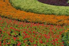 COLORFULL花在庭院里 图库摄影