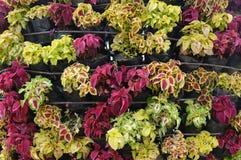 COLORFULL花在庭院里 免版税库存图片