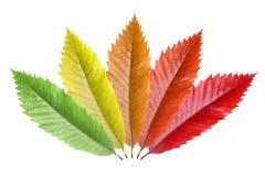 colorfull βγάζει φύλλα Στοκ φωτογραφίες με δικαίωμα ελεύθερης χρήσης