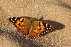 Colorfull蝴蝶说出名字的被绘的夫人 免版税图库摄影