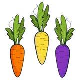 被隔绝的新鲜的有机colorfull红萝卜 向量例证