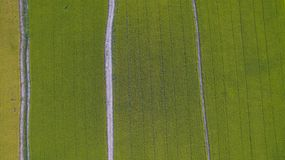 Aerial shot top view of Rice field Pathum Thani ,Thailand. Colorfull Aerial shot top view of Rice field Pathum Thani ,Thailand Stock Images