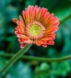 Colorfull al aire libre del jardín fresco de la flor Imagen de archivo libre de regalías