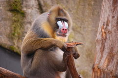 A colorfull ape Stock Photos