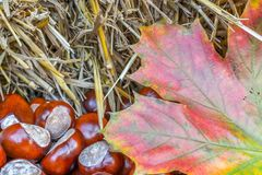 Colorfull autumn leaves with chestnuts on a hay bale as a seasonal background royalty free stock images