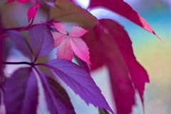 Colorfull autumn leaves royalty free stock photo