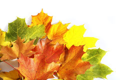 Colorfull autumn leaves isolated on the white bac Stock Photos