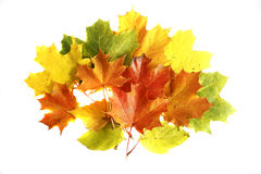 Colorfull autumn leaves isolated on the white bac Royalty Free Stock Photography